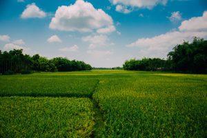 photo-of-farmland-during-daytime-2888333